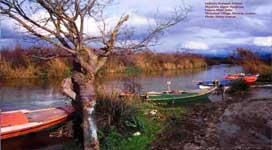 Εκβολές ποταμού λούρου, μιχαλίτσι